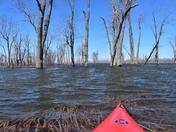 Lost in Minesing swamp.