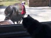Cat vs Turkey