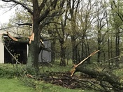 Gravette - possible tornado or straight line winds twisted a shed off it's piers and uprooted trees in the pasture