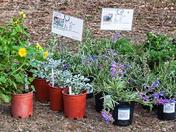 NW Chapter, Master Gardeners Annual Plant Sale