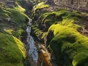 Green in Simpsonville
