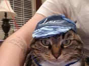 Sensi the cat