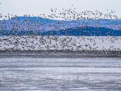 Raining ducks