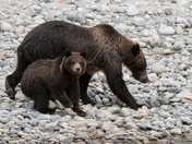 Grizzly Mom & Cub