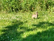 Hot day in pointe a la hache  🐰 enjoying the weather