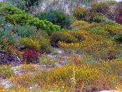 Matanzas Inlet Wildflowers
