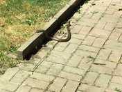 Snake on my patio in South Natomas just a few minutes ago.