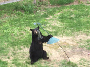 Bear takes bird feeder from the backyard
