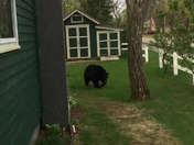 A beary nice morning !!!