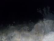 Went for a night time hike in a canyon and saw four pairs of glowing eyes!