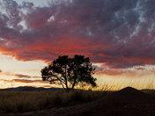 Pre-Summer Sunset