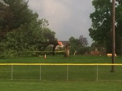 Fallen tree next to Kunkle field in Mount Joy.