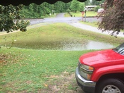 My front yard