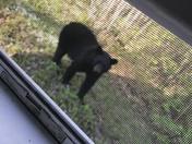 Peekin in the window