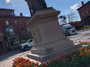 Tulips in Longfellow Square