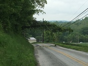 Tree on power lines. Linestown Road Willow Street.