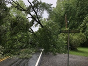 Large tree blocking McKinney road