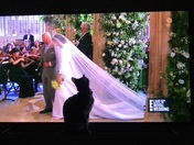 My cat was so obssssed with the dress I could hardly see the Royal Wedding!