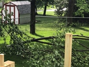 This is a downed tree limb in my back yard