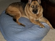 German Shepherd, National Dog Rescue Day