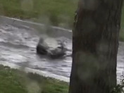 Man clinging to shopping cart in flooded arroyo