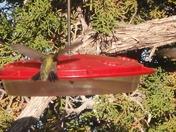 Hummingbird Wars at Ghost Ranch