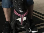 LOST Family pit. DIVA