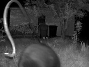 Bear takes down bird feeder in Manchester