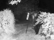 Black bear takes down feeder