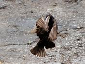 birds, 5-24-2018