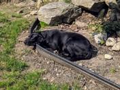 Chloe enjoying the sun
