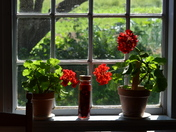 Window flowers