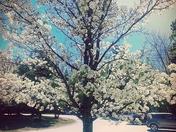Pretty flowers on a tree
