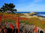 Colorful Monterey