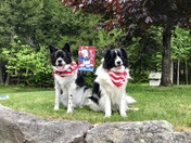 Bandit and Daisy Mae can't wait to celebrate Memorial Day!