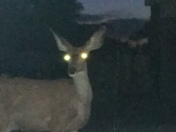 Can we all agree on one thing? Deer are friggin creepy at night