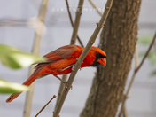 Guarded Cardinal