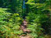 Hiking to Helmcken Falls