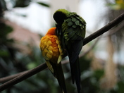 Best Bird Friends