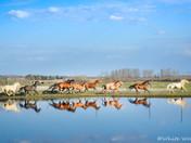 Horses Thundering By