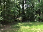 Mother bear and three cubs passing through my backyard