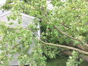 Strong winds took out our neighbors tree into our shed in Batesville, IN.