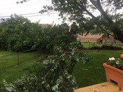Tree damage in Delhi Township.