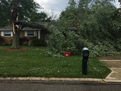 Tree, after the storm today, on Ramblingridge Dr. In White Oak
