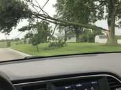 Large tree on power lines on Maher Road in Independence and power is out