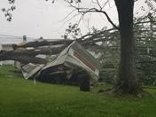 Tree down Bentonville Ohio