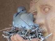 The doves on my front porch eggs hatched