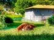 Tyson sunbathing!