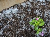 Hail in Elizabethtown