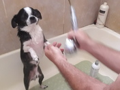 Maxy getting a bath,